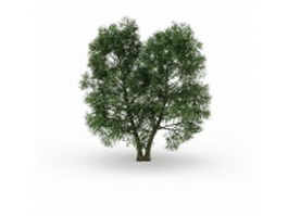North American beech tree 3d preview