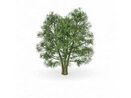 European beech ornamental tree 3d model preview