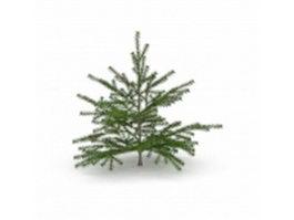 Canaan Fir Christmas tree 3d preview