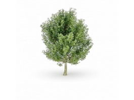 Acer saccharum 3d preview