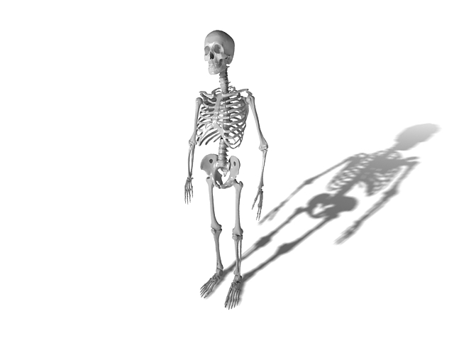 Adult human skeleton 3d rendering