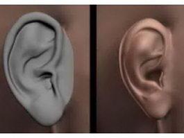 Human ear 3d preview