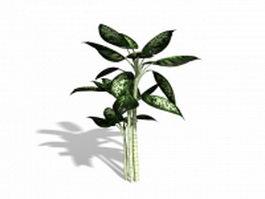 Dieffenbachia plant 3d preview