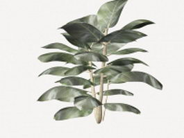Ficus elastica rubber plant 3d preview