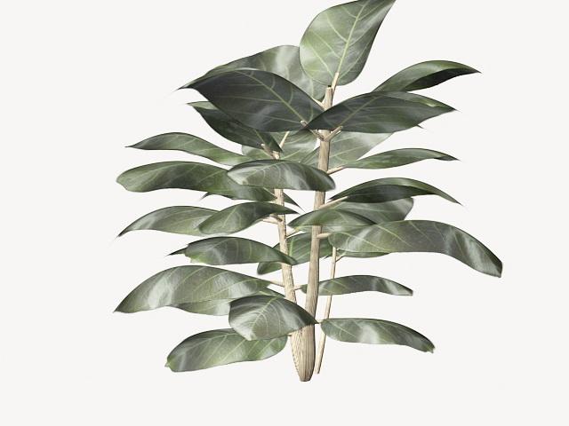 Ficus elastica rubber plant 3d rendering
