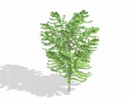 Acer saccharinum silver maple tree 3d model preview