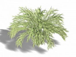 Phyllostachys Asian bamboo 3d preview