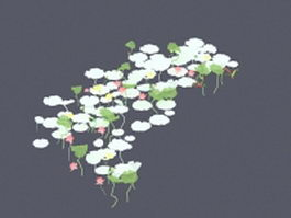 White water lily 3d model preview