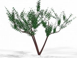 Yard small tree 3d model preview