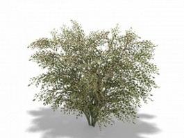 Elaeagnus umbellata 3d model preview