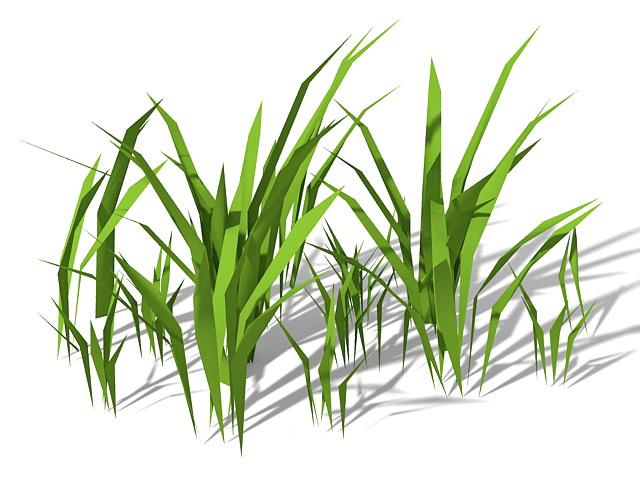 Stout bamboo grass 3d rendering