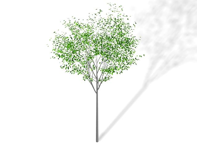 Dwarf ornamental tree 3d rendering