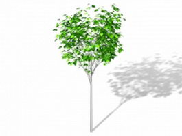 Decorative ornamental tree 3d model preview
