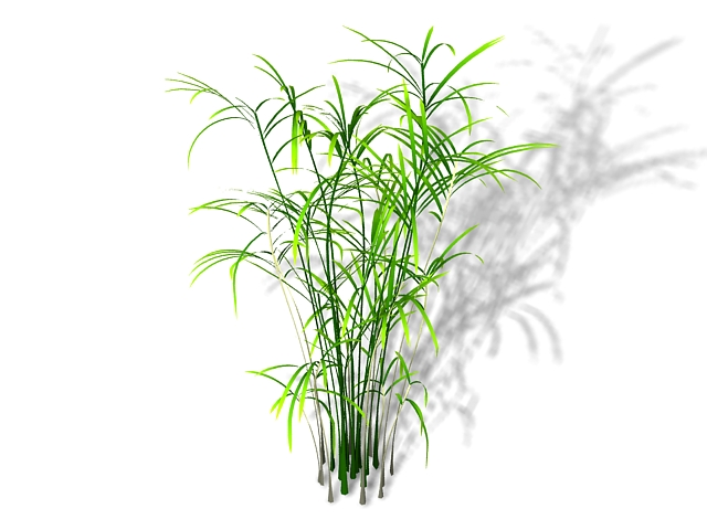 Reed palm plant 3d rendering