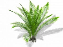 Areca bamboo palm plant 3d model preview