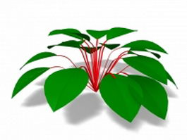 House plant with round Leaves 3d model preview