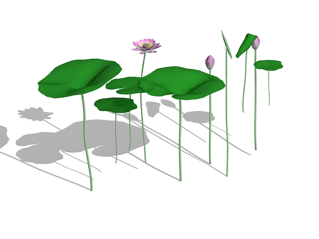 Indian lotus aquatic plants 3d rendering