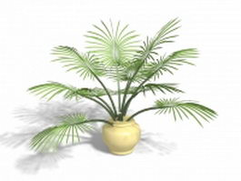 Potted palm plant 3d preview