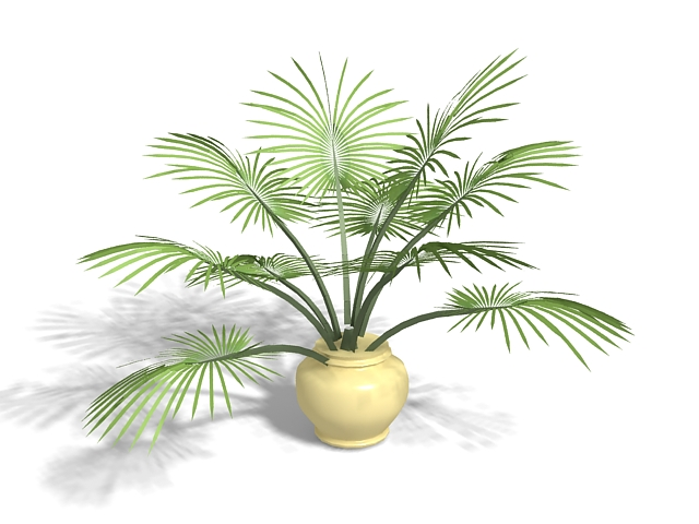 Potted palm plant 3d rendering