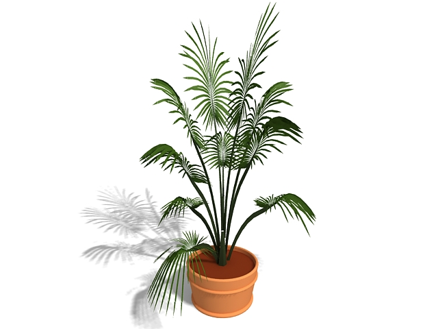 Indoor potted palm plant 3d rendering