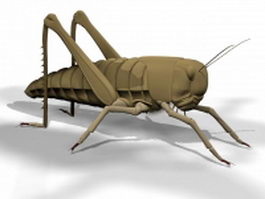 Grasshopper insect 3d preview