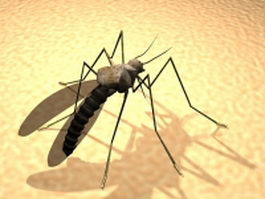 Adult mosquito 3d model preview