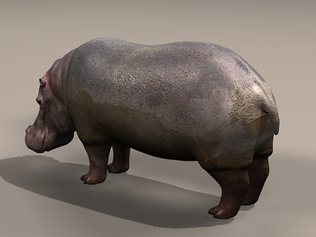 Common hippopotamus 3d rendering
