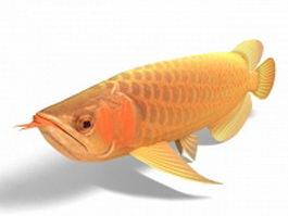 Asian arowana dragonfish 3d model preview