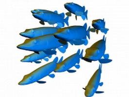Fish school 3d model preview