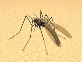 Mosquito feeding on human skin 3d model preview