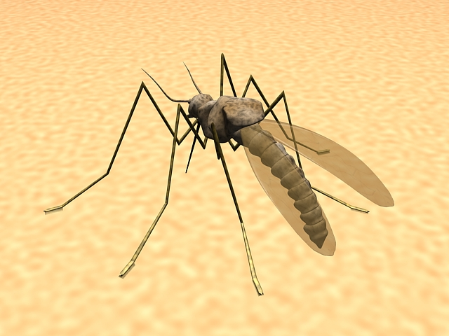 Mosquito feeding on human skin 3d rendering