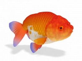 Lionhead goldfish 3d preview