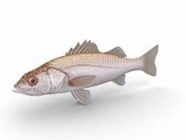 White weakfish 3d model preview