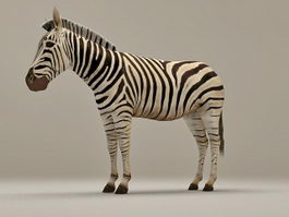 Africa Zebra 3d preview