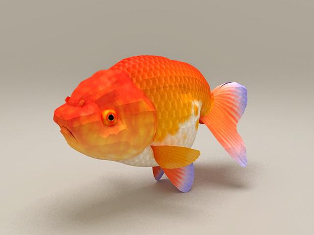 Red Ranchu Goldfish 3d rendering