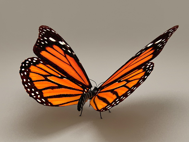 Common Tiger Butterfly 3d rendering
