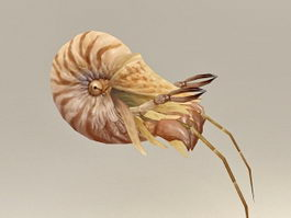 Hermit crab 3d model preview
