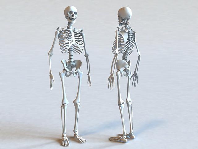 Human Skeleton Bone 3d rendering