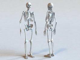 Human Skeleton Bone 3d preview