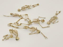 Human Skeletons 3d preview