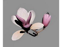 Magnolia Flowers 3d preview