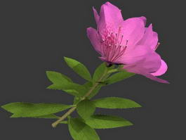 Pink Flower 3d preview