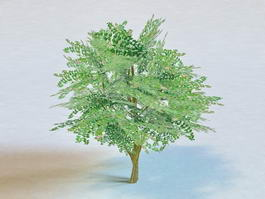 Low Poly Tree 3d model preview