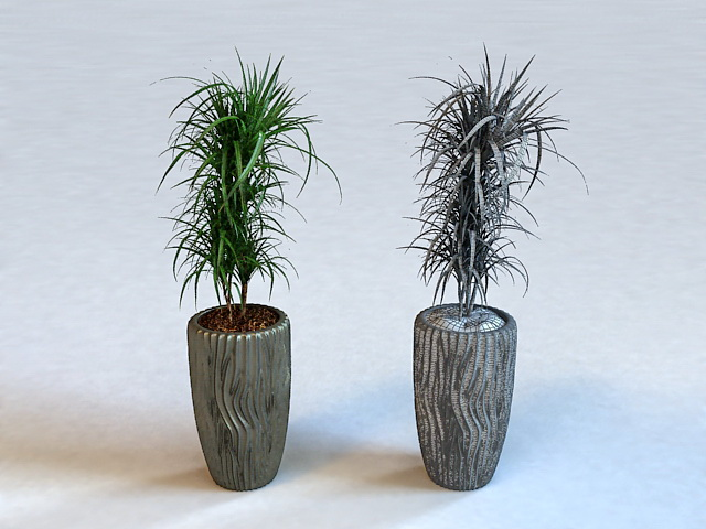 Tall Indoor Potted Plants 3d rendering