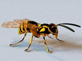 Yellow Jacket Wasp 3d model preview
