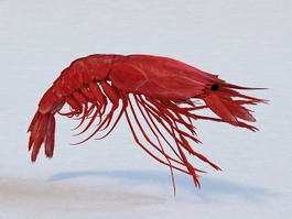 Large Prawn 3d preview