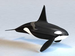 Killer Whale 3d preview