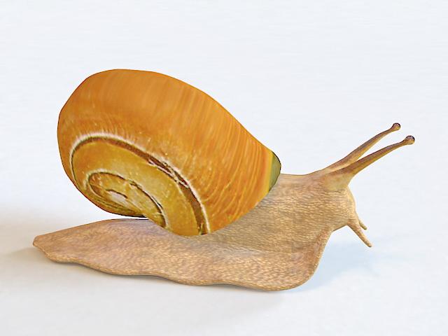 Beautiful Snail 3d rendering