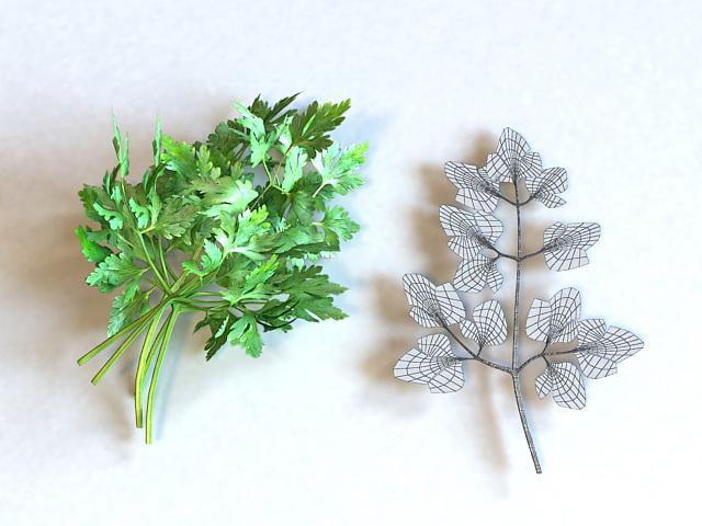 Fresh Parsley Leaves 3d rendering