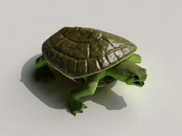 Musk Turtle 3d preview